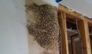 Mold Growth In Water Damaged Wall